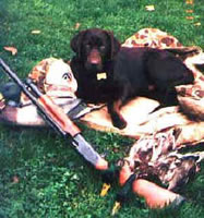Merganser's Ruger with first duck retrieves (Merganser's  (24kb)